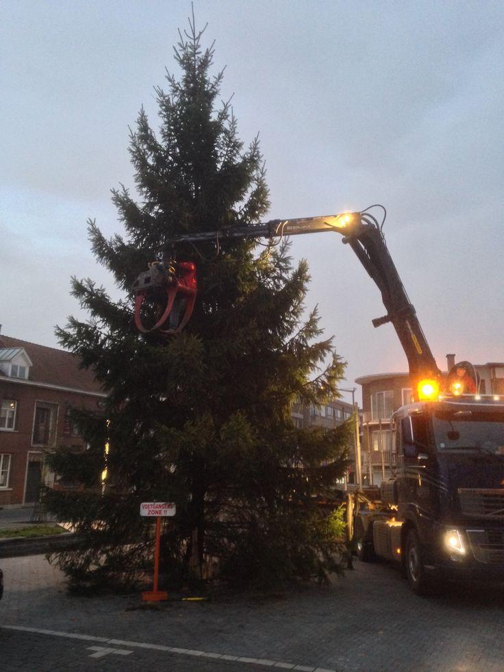 Sapin Epicea 13m Sapins de Noel - Christmastrees - Nordmann - Boules de Noel - Articles de Noel