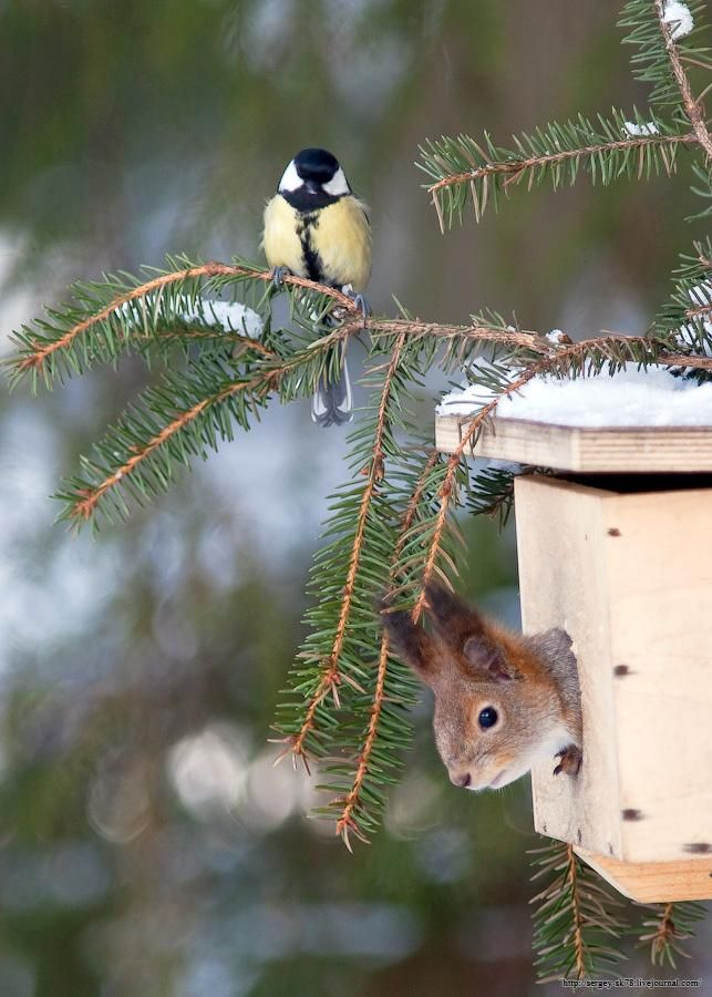 Something is wrong here!!!!!Birdhouses, House Guest, Hamburgers Meat Recipe, Friends, Winter, Squirrels, Little Birds, Birds House, Funny Animal