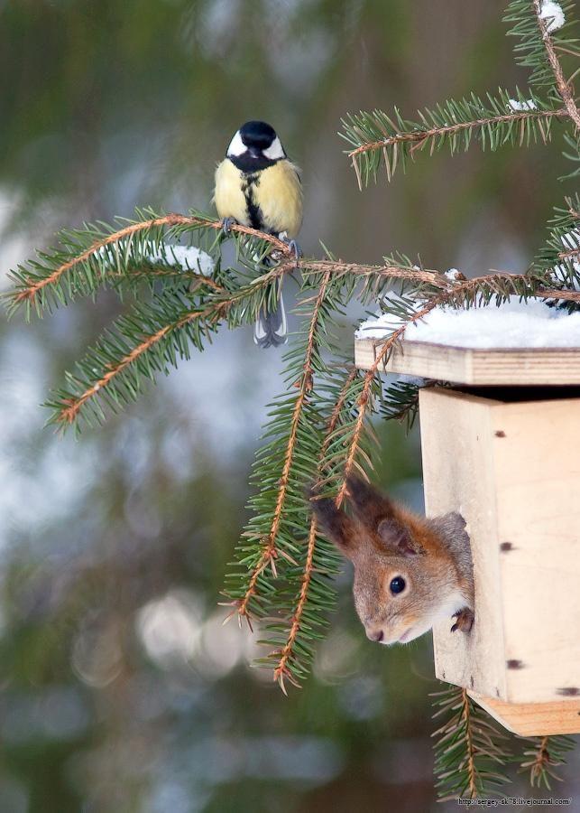 Birds ❀⊱My Bird House⊰❀ 911... I need to report an intruder.