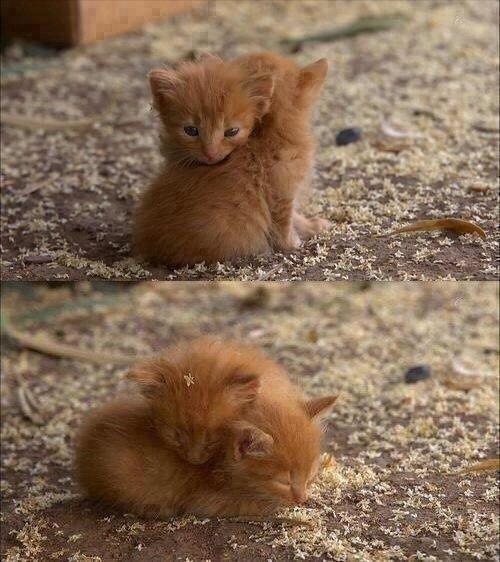Kitty Babies