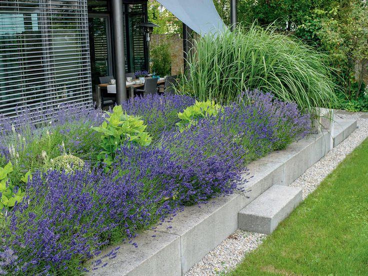 Die Blütezeit des Lavendels ist zwar fast vorbei, aber es bleibt noch genügend Zeit, um sich Lavendel für die kommende Saison selbst heranziehen. Wir stellen Ihnen vorab schon mal schöne Ideen mit Lavendel für den nächsten Sommer vor.