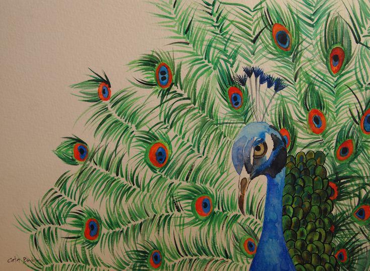 Peacock  Watercolor paint