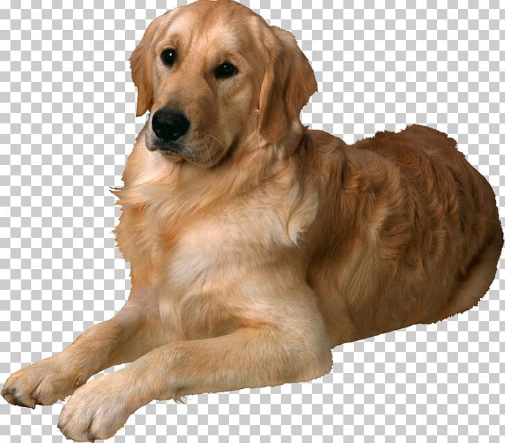 Dogs Png Dogs New Background Images Dogs Studio Background Images