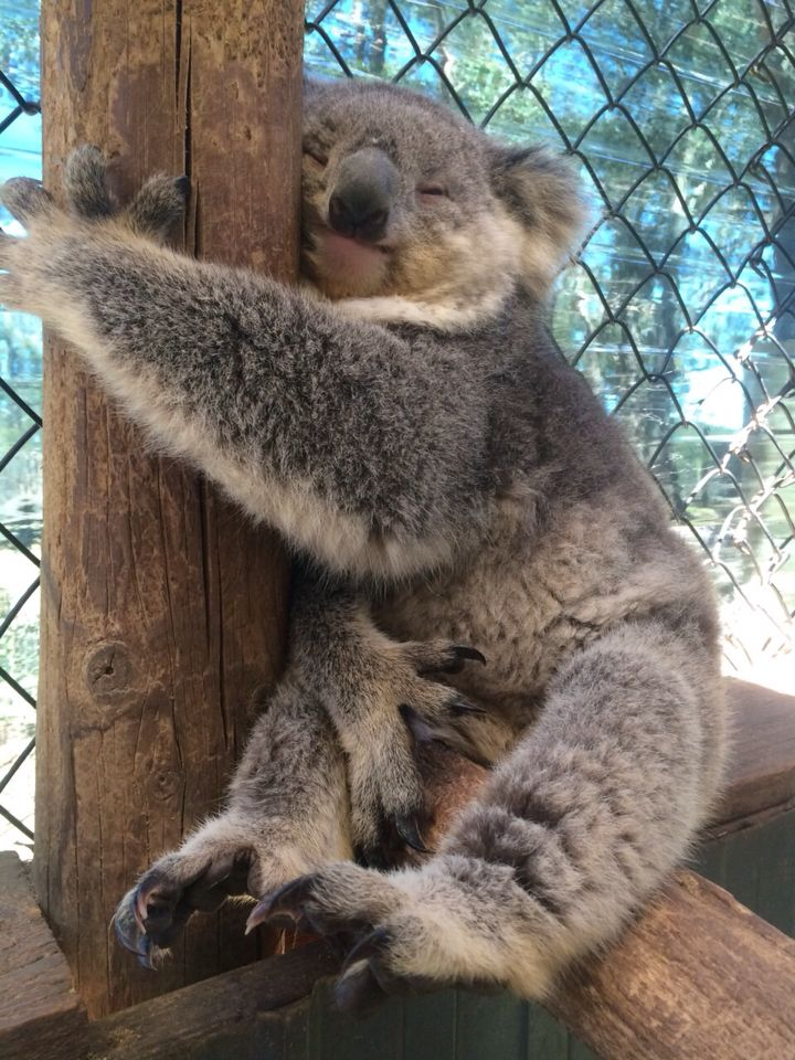 Gwen's koala hugging his tree