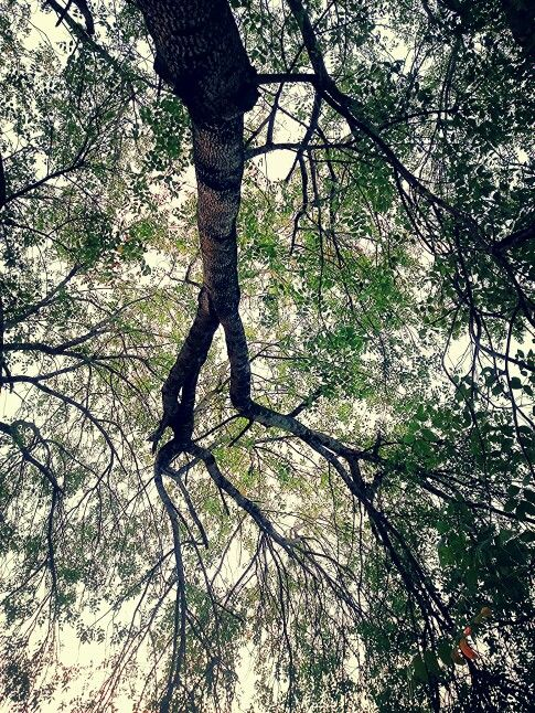 Perfect meditation spot... under this beautiful tree.