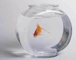 How to Take Care of a Goldfish: Keeping it Alive and Happy  Read more : http://www.ehow.com/how_5096333_care-goldfish-keeping-alive-happy.html