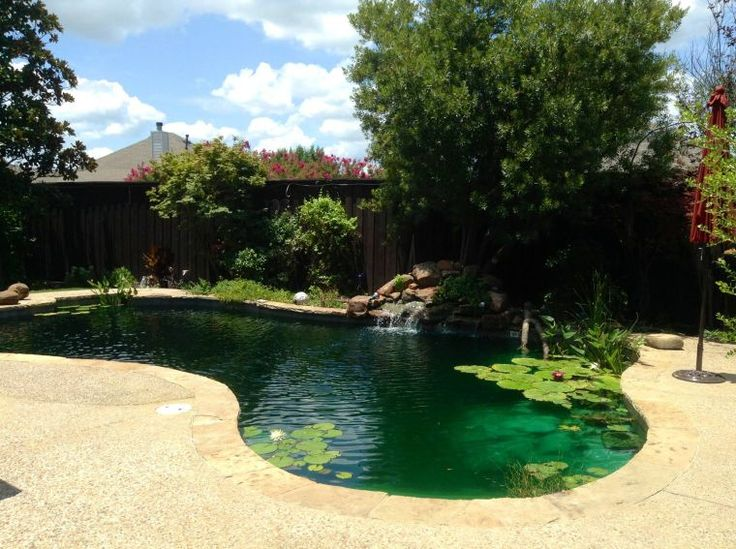19 best images about convert pool to pond on pinterest for Swimming pool koi pond conversion