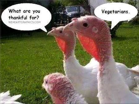 Thanksgiving thanksgiving thanksgiving pictures happy thanksgiving thanksgiving humor funny thanksgiving quotes
