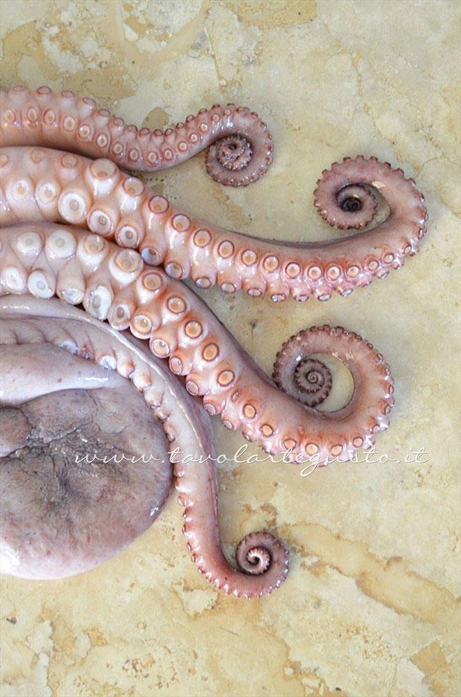 Il Polpo appena dopo l'immersione dei tentacoli in acqua bollente - Ricetta Polpo all'insalata