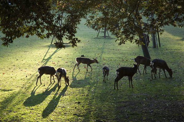 Nara/Deer Park