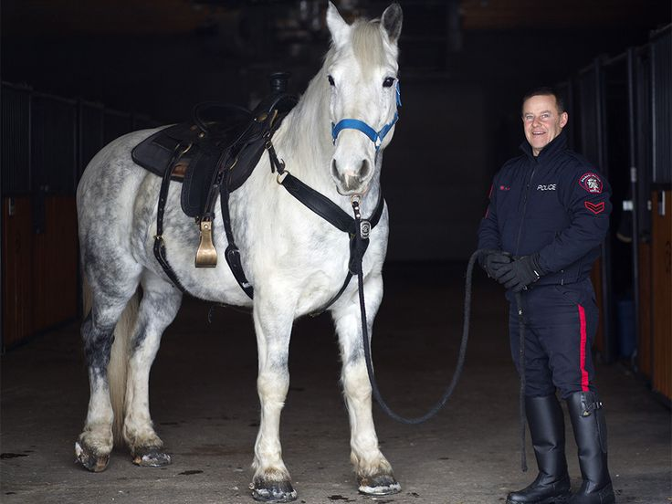 Calgary Police Service's Juno the horse gets his badge http://rplg.co/b8630e90