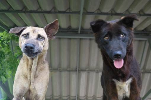 Volunteering with Animals Abroad – Our Week at the Dog Rescue Project in Thailand