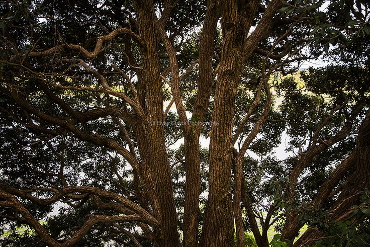 Trees alongside Pauatahanui Inlet, Paremata, Porirua, Wellington | © Elyse Childs Photography