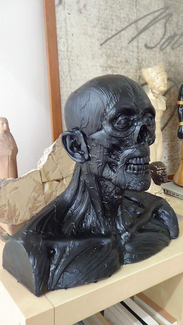 anatomy head sculpture