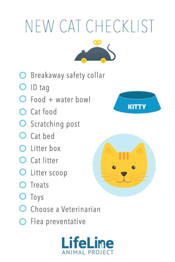 Kittens Care Kittens Keep Meowing Cat Checklist Cat Care Cat Care Tips