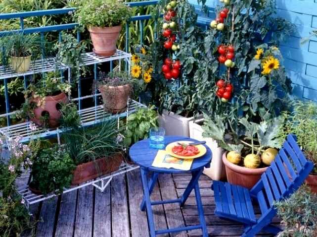 Nem kell lemondanunk a kertészkedés örömeiről, azért mert mondjuk a 2. vagy netán a 7. emeleten lakunk egy lakásban. Persze ilyen helyzetben a lehetőségeink meglehetősen végesek, és a cél nem az önellátás, azért érdemes ezzel is megpróbálkozni.  A hobbi kertészkedésnek ( NEM…