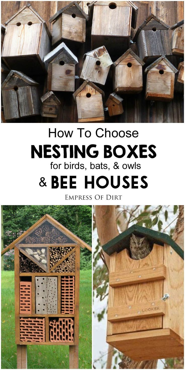 Bird nesting boxes and bee houses can help wildlife and benefit your garden if used properly. These tips help you decide which type of species you want to house, including bees, bird, bats, and owls. Be sure to choose a house specifically designed for species in your area.