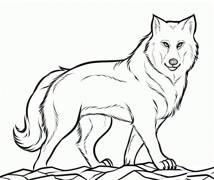 wolf coloring pages online