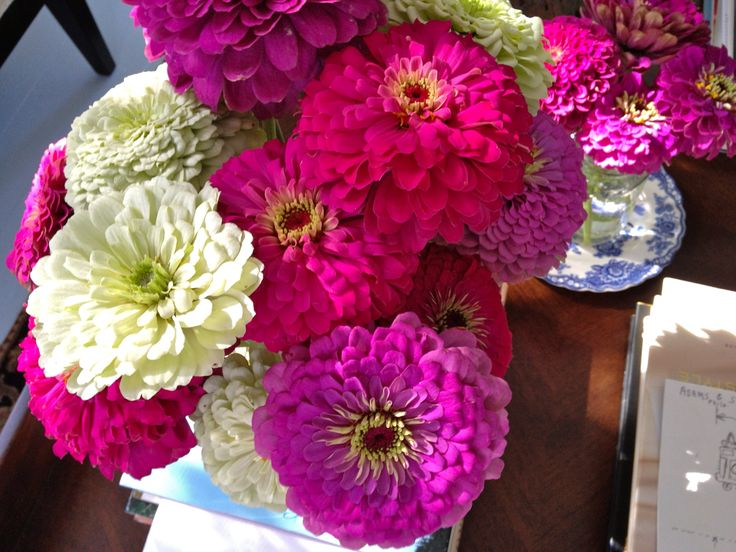 96 best Zinnias images on Pinterest Zinnias Flower gardening