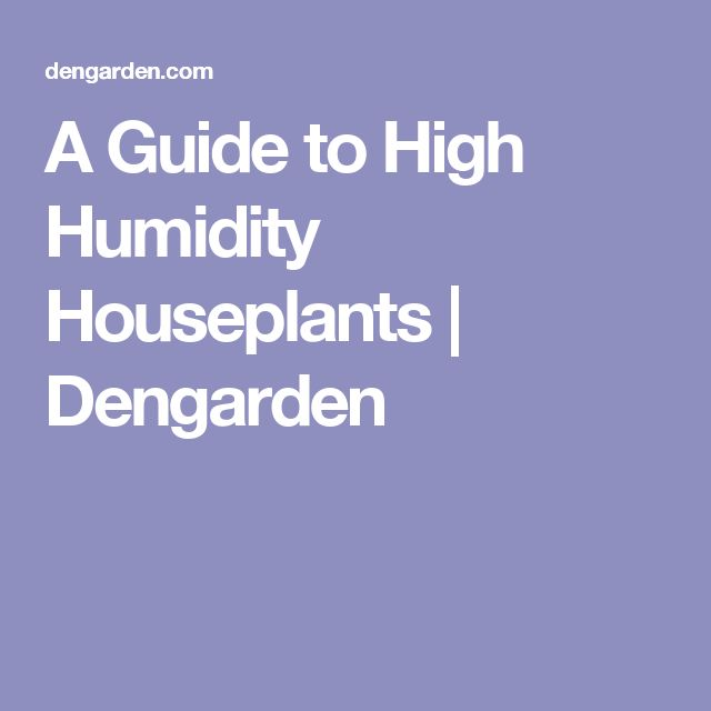 A Guide to High Humidity Houseplants | Dengarden