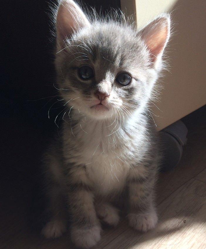 100 Cute Female Kitten Names Kitten Names Kittens Cutest Kitten Names Girl