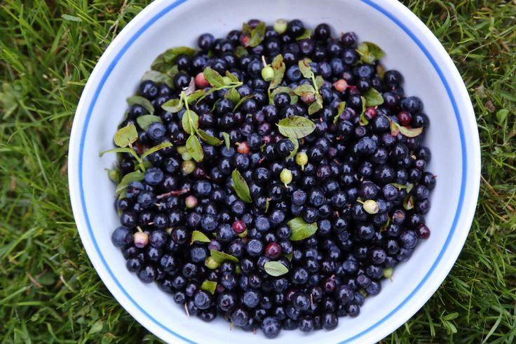 The first blueberries! Kesän ekat!