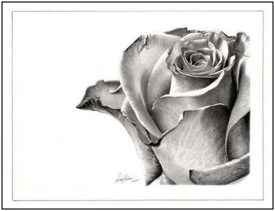 Incredibly Realistic Pencil Drawings by Linda Huber