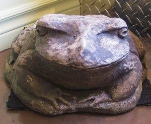 """Big Ugly Toad - fat & sloppy. He's big enough for a child to straddle.  Looks great peeking out from under a showy bush. 16"""" x 12"""""""