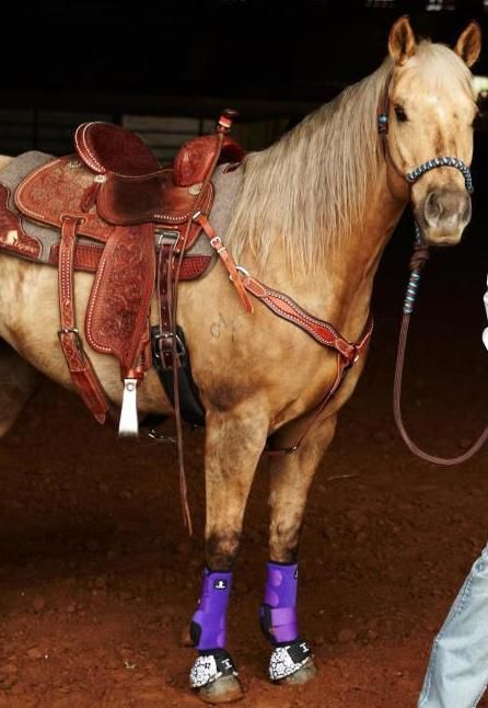 sherry cervis amazing mare stingray