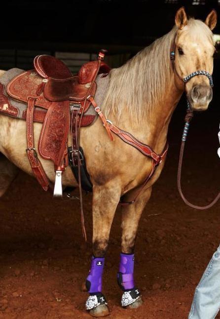 Sherry Cervi's amazing mare STINGRAY. <3