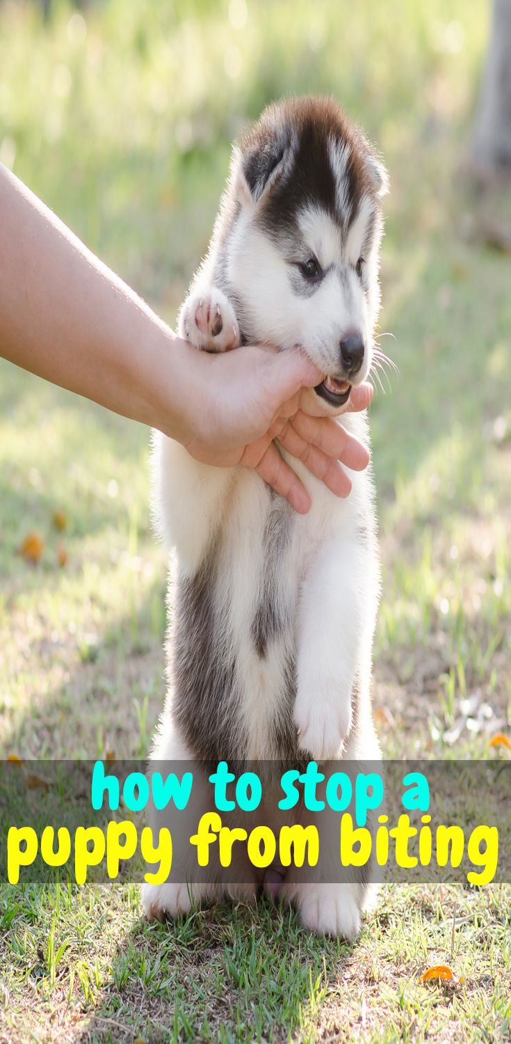 How To Stop A Puppy From Biting Puppy Training Puppy Biting