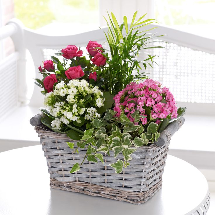 The 230 best sending flowers images on pinterest floral theres a pretty display of pale pink kalanchoe a white kalanchoe a pink rose indoor flowersplant mightylinksfo