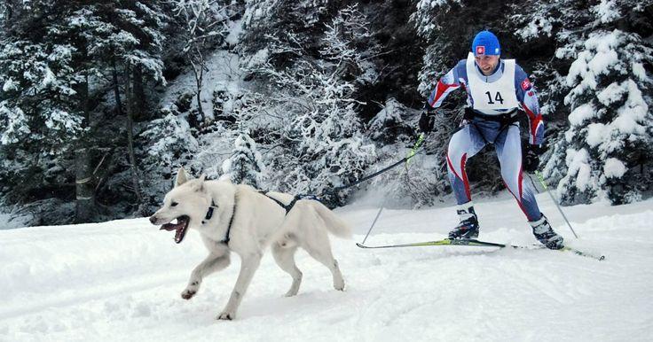 Michal Ivančo a Igor Pribula nás budú reprezentovať na Majstrovstvách sveta psích záprahov v šprinte Auronzo di Cadore.