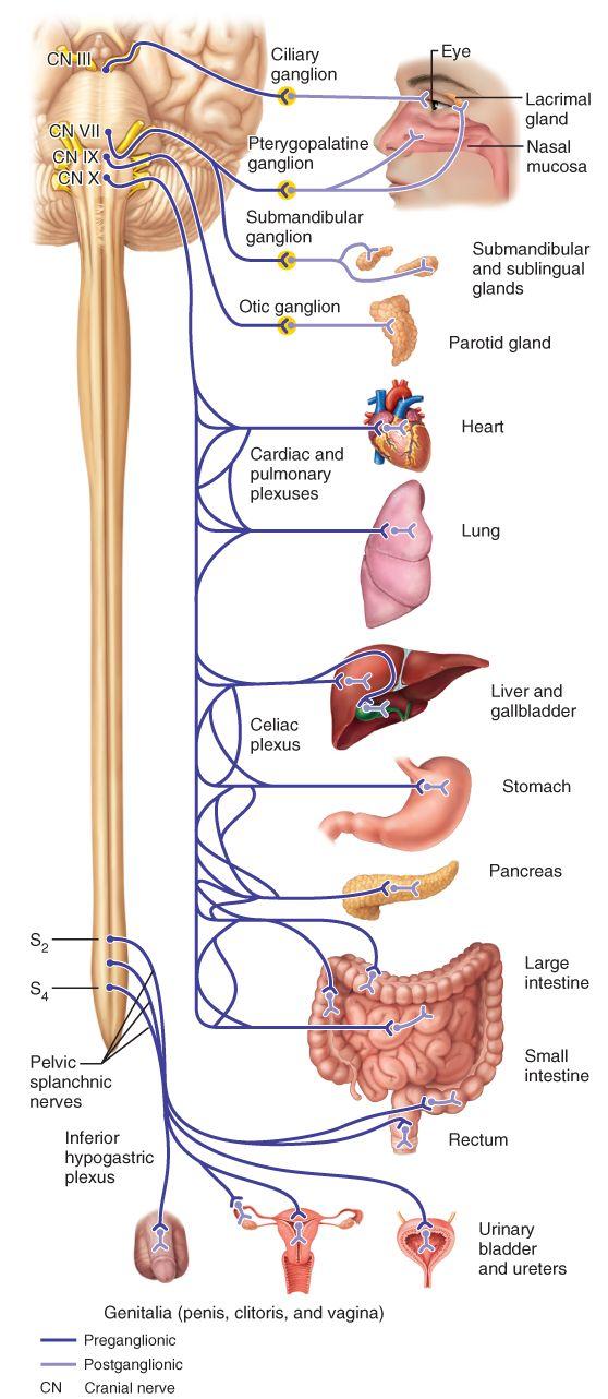 269 best Anatomy images on Pinterest | Anatomy, Anatomy reference ...