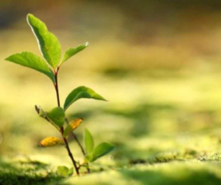 La scoperta che si chiama fotosintesi inversa è la premessa per un mondo più ecologico.  Attraverso di essa si potrebbe produrre carburante di origine biologica contenendo i costi. Soprattutto in tempo molto più rapido.