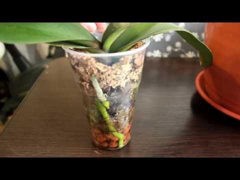 Орхидея в закрытой системе. Орхидея в стекле* ЧАСТЬ 1 - YouTube