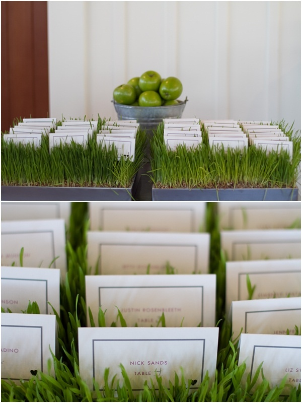 I used wheat grass at my own wedding. This was used to hold placecards at Carneros Inn Napa Valley