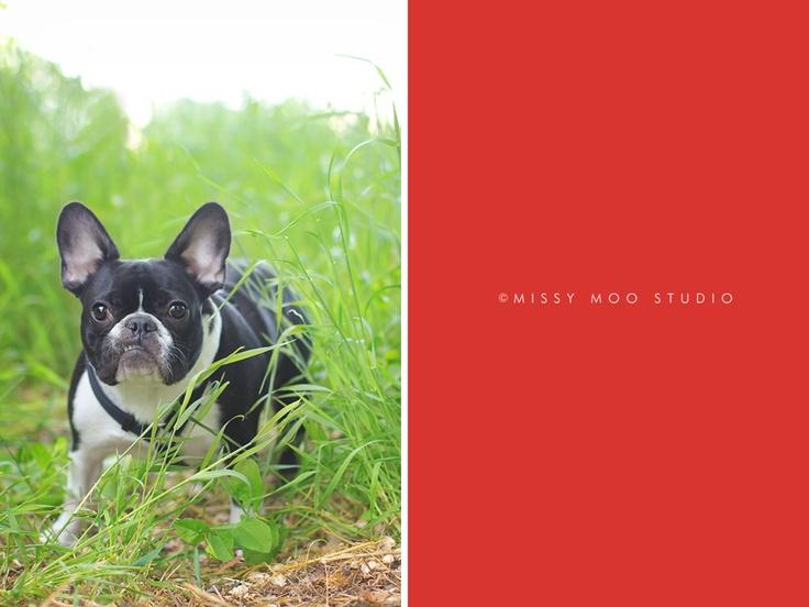French bulldog underbite! Photos by Me Pinterest