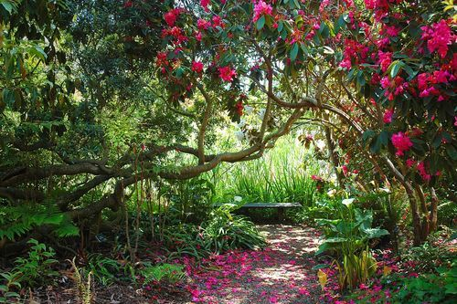 83 Best Images About Fort Bragg Ca On Pinterest Botanical Gardens Fort Bragg California And House