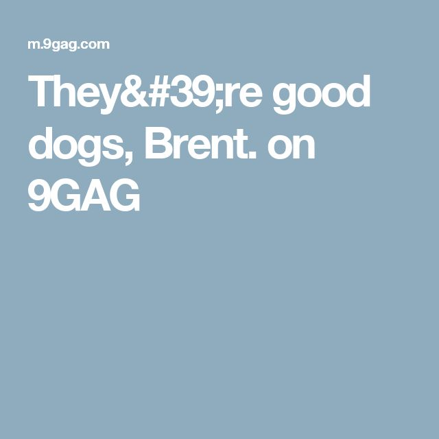 They're good dogs, Brent. on 9GAG
