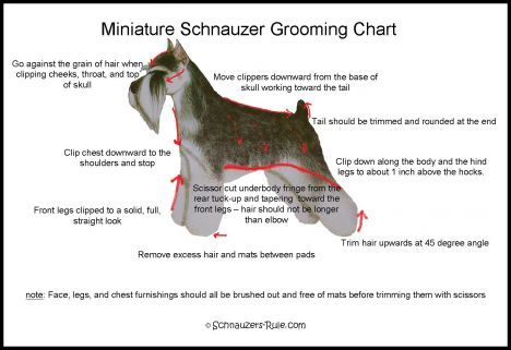 Miniature schnauzer grooming chart. This is why I like to cut my own. Cant find a groomer who does it right.
