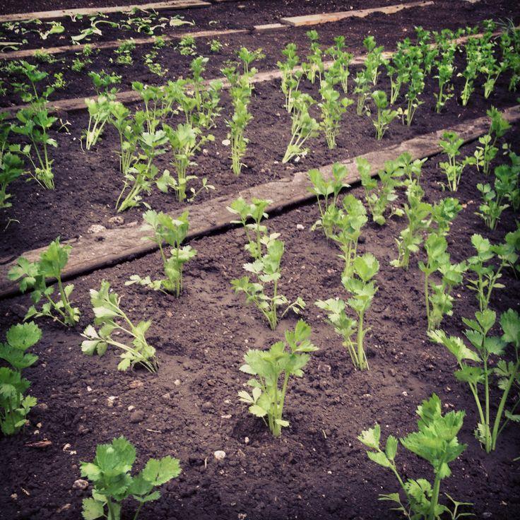 Vista la giornatina un po' grigia... noi ne abbiamo approfittato per cominciare a piantare le piantine nel nostro #orto, presto saranno pronte per la cucina e per il nostro buffet!!!!  #verdura   #insalata   #trentino   #valdinon   #blumenhotelbelsoggiorno