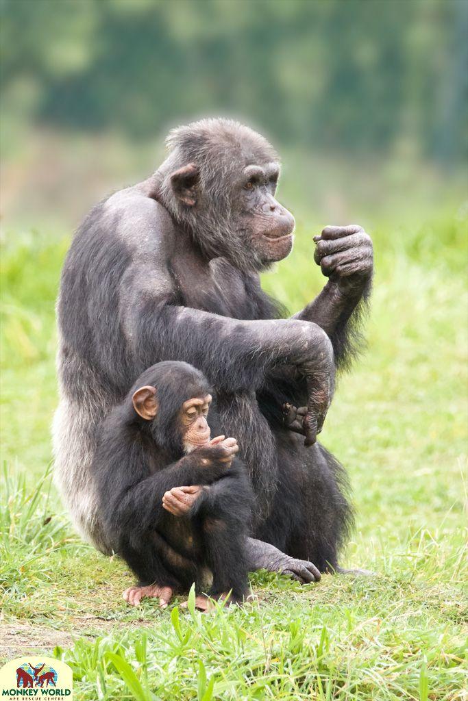 Hananya and his daughter, Thelma at Monkey World, Dorset.