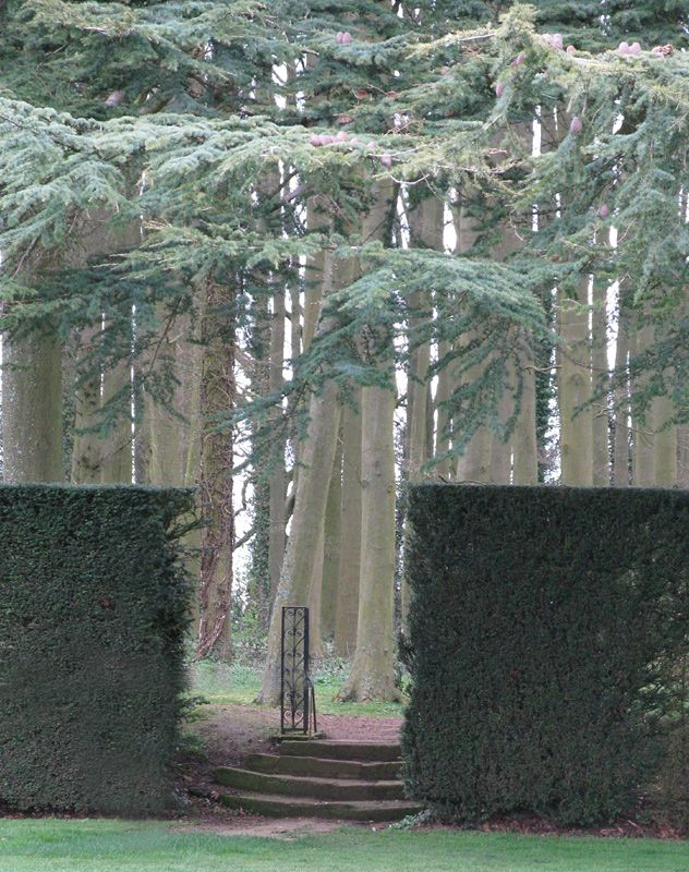 Some trees at Hidcote.