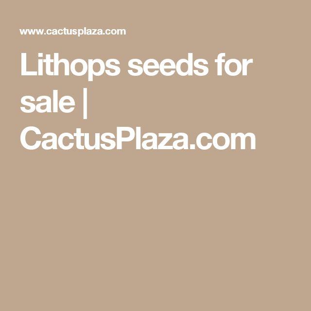 Lithops seeds for sale  | CactusPlaza.com