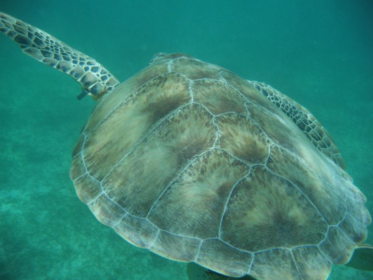 Perfect moment in time . Diving in Riviera Maya