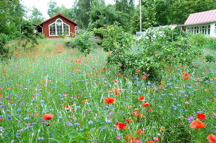 Äng med vallmo och blåklint (Meadow with poppies and cornflower)