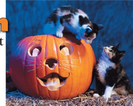 Halloween Safety Tips for Your Cat: Petacular Halloween