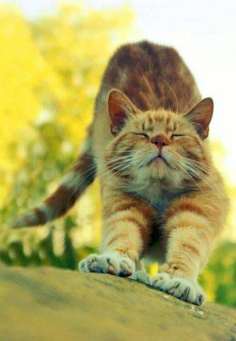 "cuteandadorable: ""Stretching!❤️❤️ """
