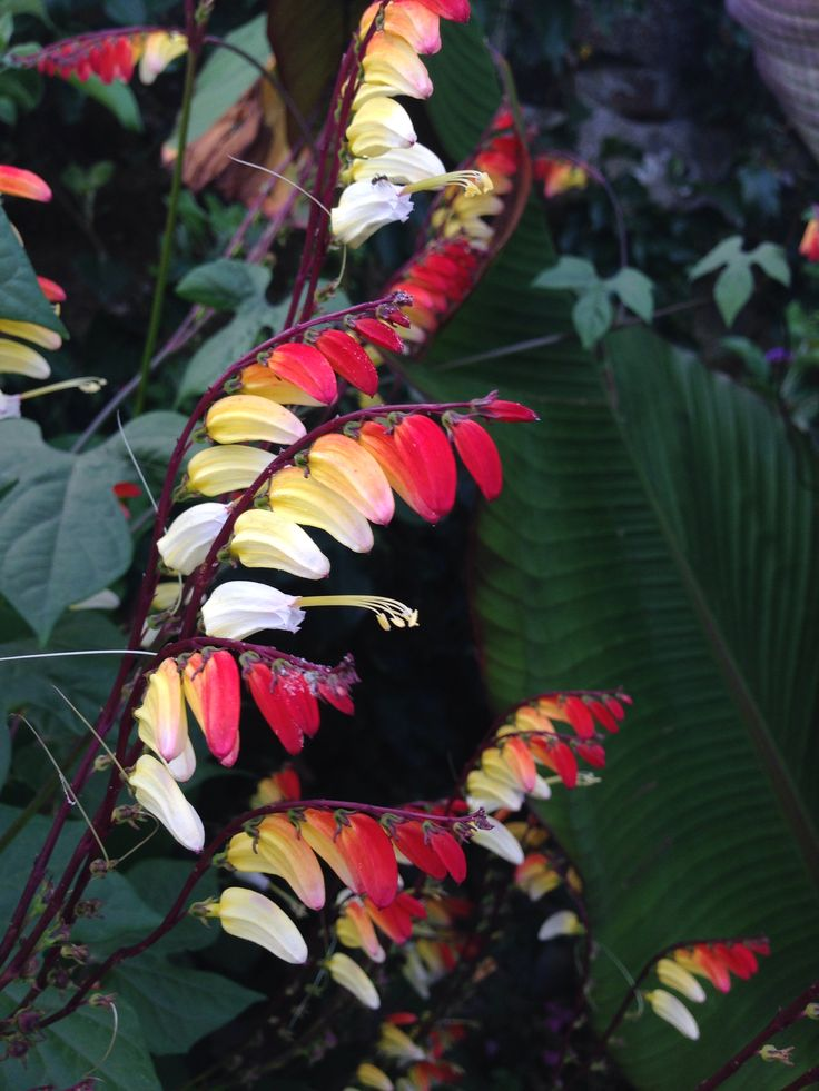 Flowers feather yellow red